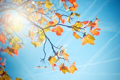 """Thu là mùa của """"lá vàng"""""""