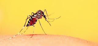 Cinco casos suspeitos de febre amarela são notificados na PB, diz secretaria de saúde