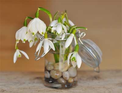 beberapa kerikil dan bebrapa kuntum bunga putih ini unik juga menjadi penghias toples kaca anda