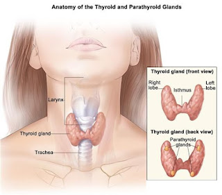 Thuốc điều trị bệnh ung thư vòm họng