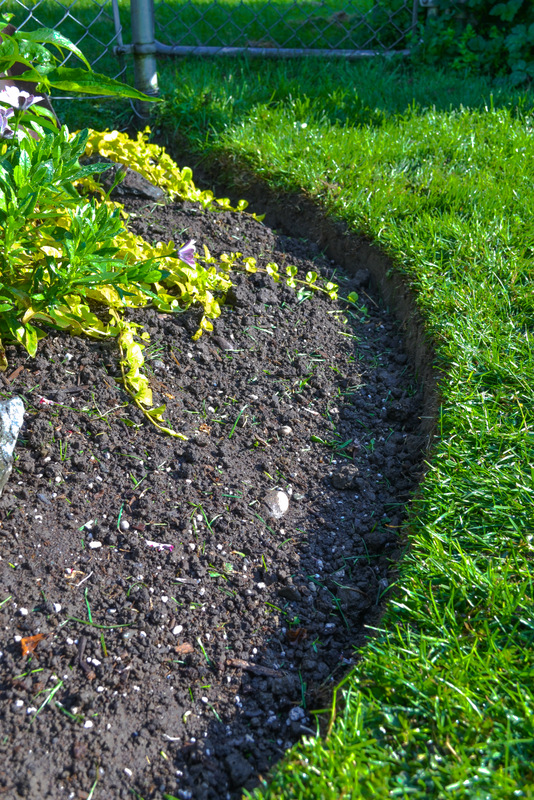 How To Edge Flowerbeds Like A Pro Via Funkyjunkinteriors Net Arent Those Flowerbed Edges