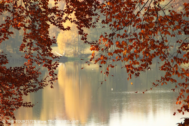 Red leaves in front of a lake, trees on the opposite bank reflected in the water.
