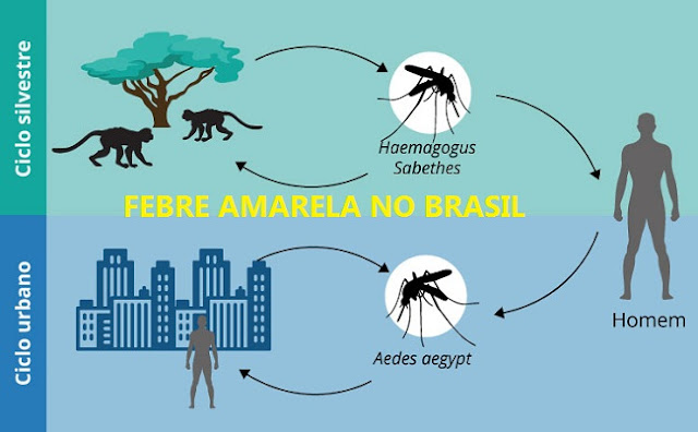 Ciclo Urbano e Silvestre da Febre Amarela