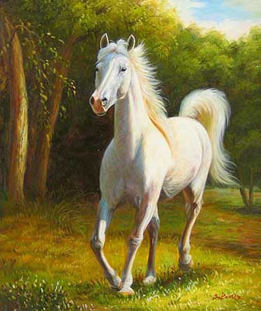 HD Animals Wallpapers: White Arabian Horse Pictures and ...