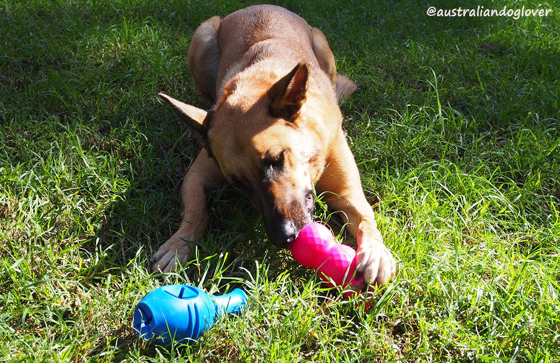 Kong Genius Leo Dog Toy