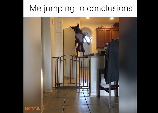 Funny Dog Videos - Me jumping to conclusions
