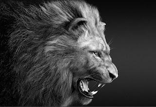Pengisian Khodam Raja Singa, khodam singa putih, khodam singa barong, amalan ilmu khodam singa, khodam singa emas, ilmu singa allah, ilmu singa putih, ajian singa raja, macam macam khodam dan fungsinya,