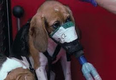 6/18/12 Euthanasia Protocol for Animals After Researchers  Are Done   With Their Cruel Experiments
