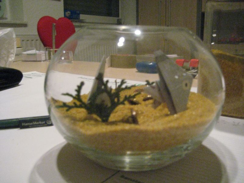 geldgeschenk aquarium fische zuhause image idee. Black Bedroom Furniture Sets. Home Design Ideas
