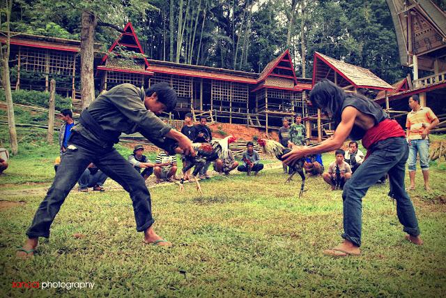 http://torajanculture.blogspot.com