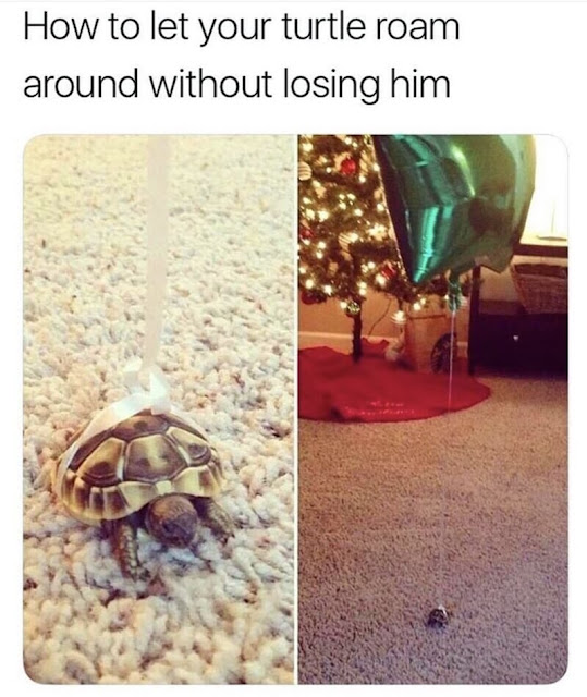How to let your turtle roam around without losing him