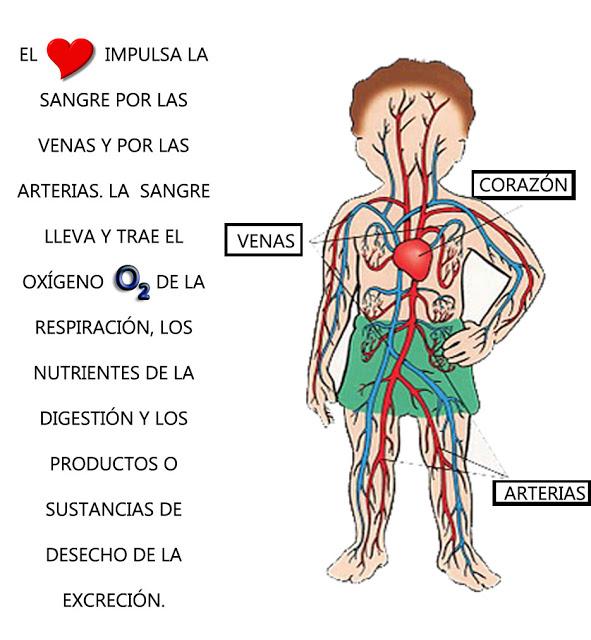 El Cuerpo Humano : LEER