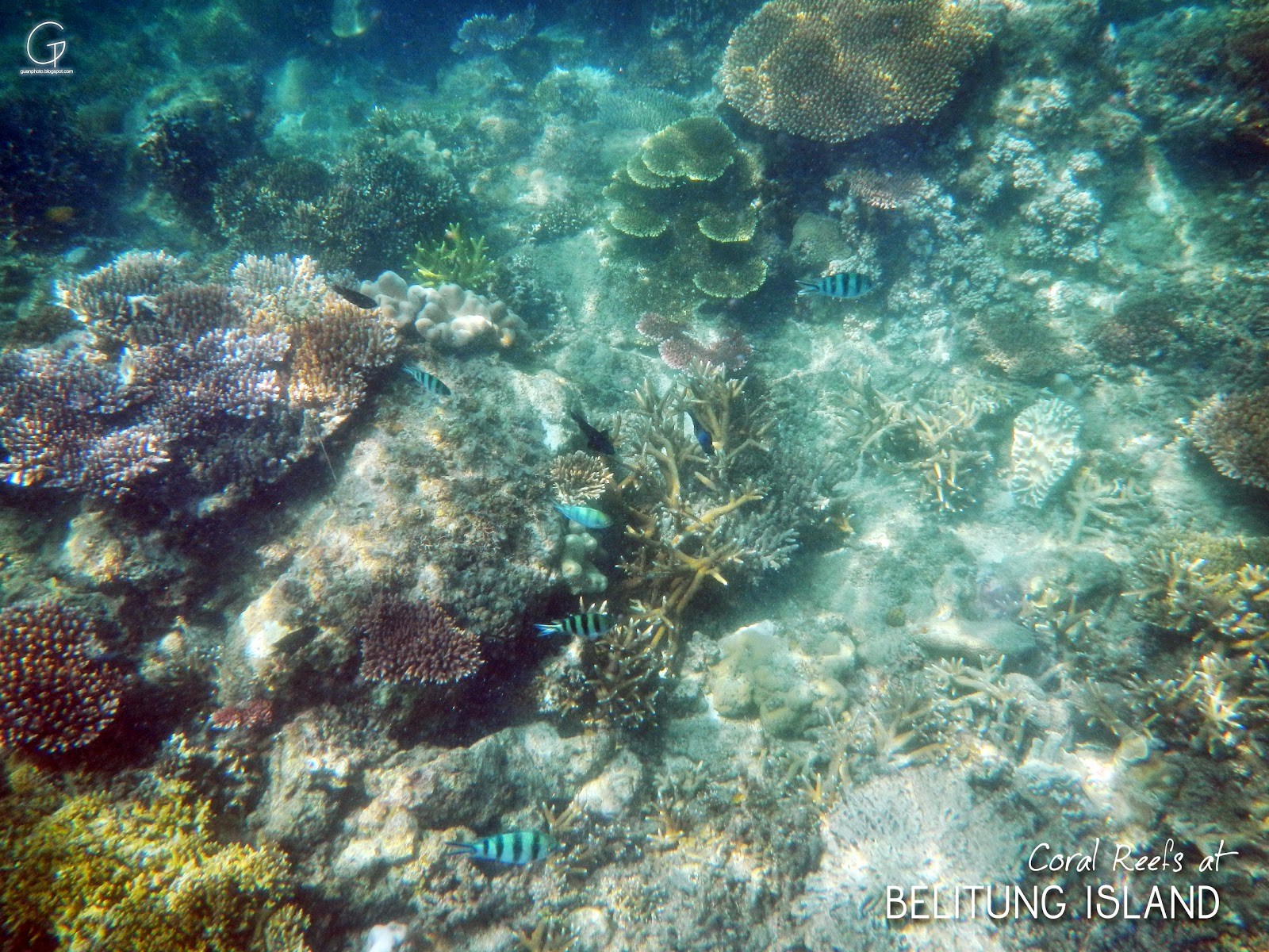 INDONESIA ISLAND HOPPING (Trip, Tour & Travel): Under Sea ...