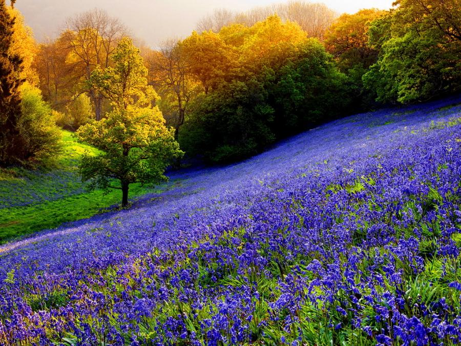 Spring Mountain Landscape Flowers Purple Colored Hills: Beautiful Places To Visit And See: USA Most Beautiful Places