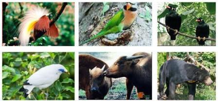 Flora dan Fauna Identitas Provinsi di Indonesia