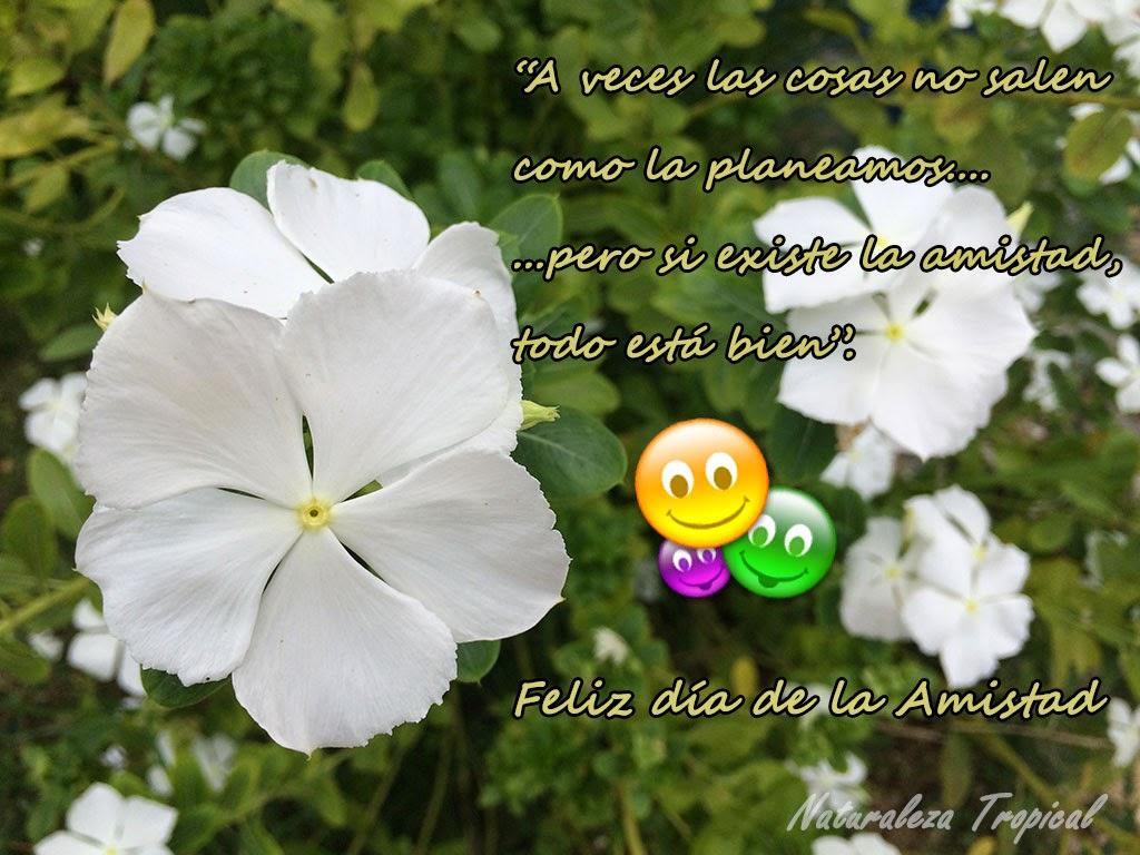 frase de amistad con flor vicaria