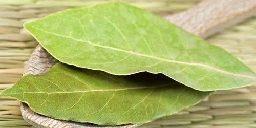 khasiat daun salam bagi kesehatan