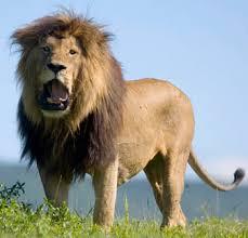 Image penyakit raja singa wanita   spesial penyakit kelamin