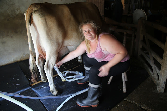 Amy milking a cow. Raw milk at The Calf at Foot Dairy, Norfolk