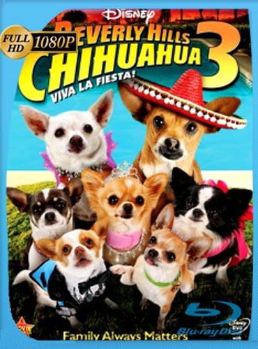 Un Chihuahua De Beverly Hills 3 (2012)HD [1080p] Latino [GoogleDrive]