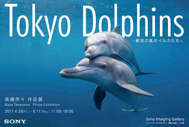 ソニーギャラリー写真展Tokyo Dolphins -東京の島のイルカたち-