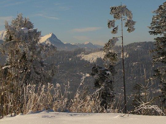 Giewont i dalsze szczyty Tatr Zachodnich widoczne z granicy na Górkowym Wierchu.