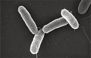 bacterii 5 secunde