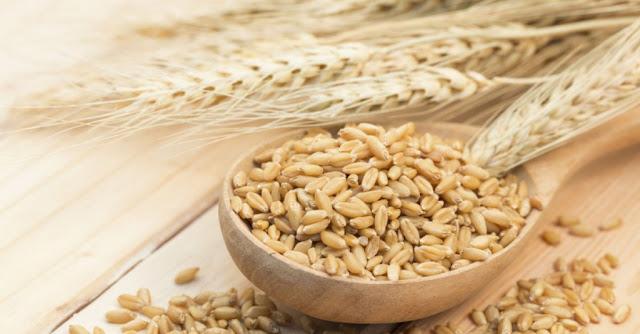 Benefícios da cevada e Como Cozinhar