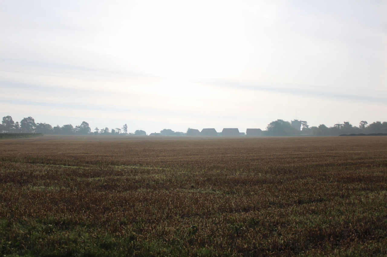 Dawn over fields