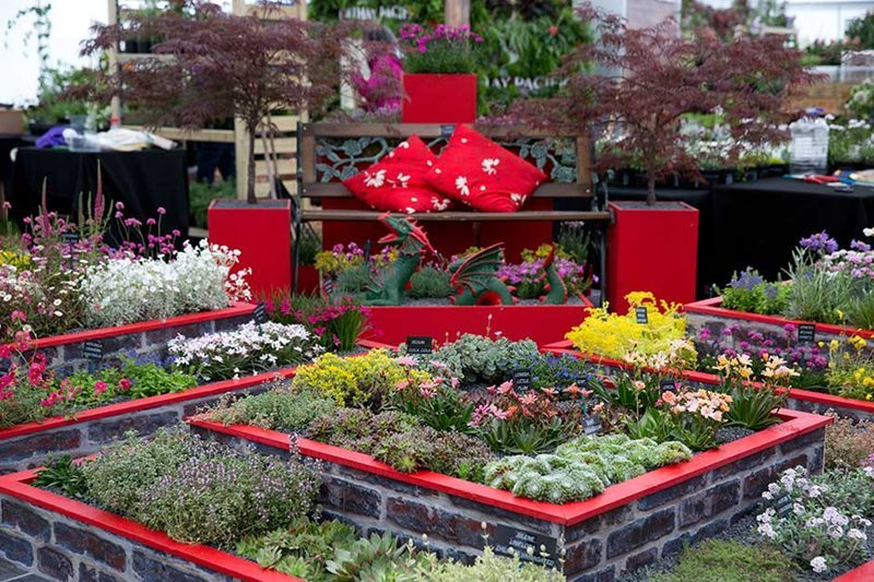 Plantas alpinas. Alpine Plants. Floral Marquee. Chatsworth Flower Show 2017