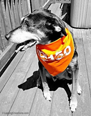 Help Teutul Wish the ASPCA a Happy 150th - and enter to WIN a #ASPCA150 Gift Pack! #adoptdontshop #rescuedog #LapdogCreations ©LapdogCreations