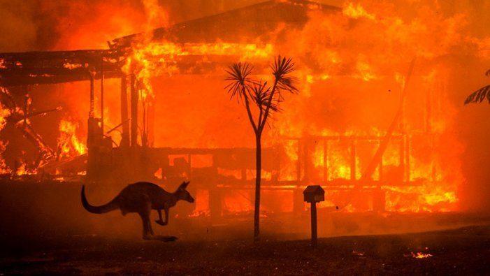 No todo es malo en el 2020 (Guerra, extinción, incendios, terremotos...)