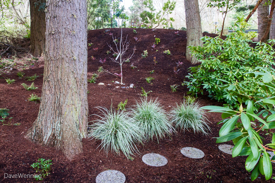 A Pacific Northwest Forest Garden