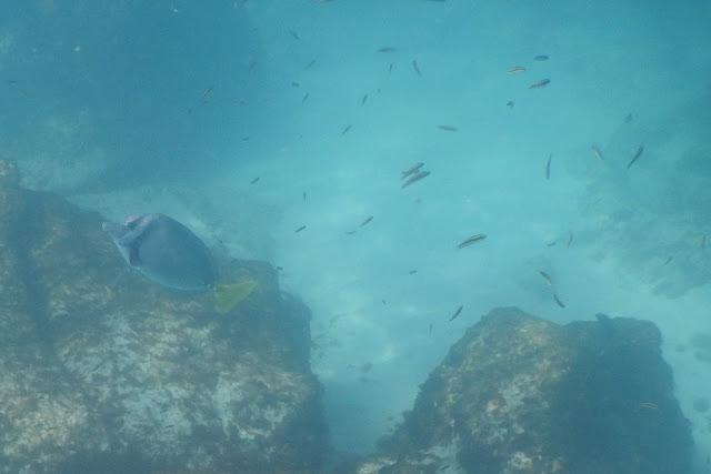 Gardner Bay under water