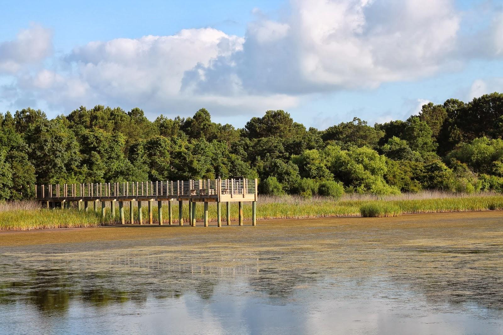 South Carolina Gator Country: Swampy lands - mitcheci photos