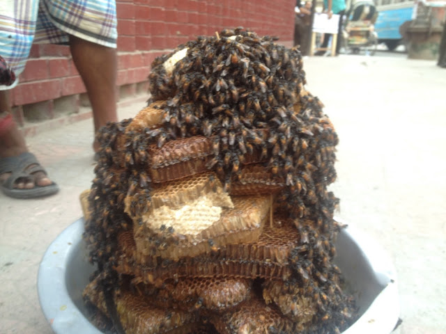 Beehive at Dhaka road
