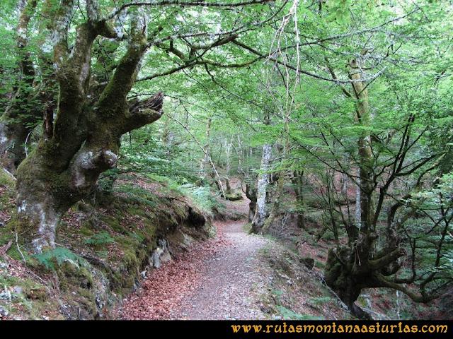 Ruta Bosques de Moal: Atravesando frondoso bosque