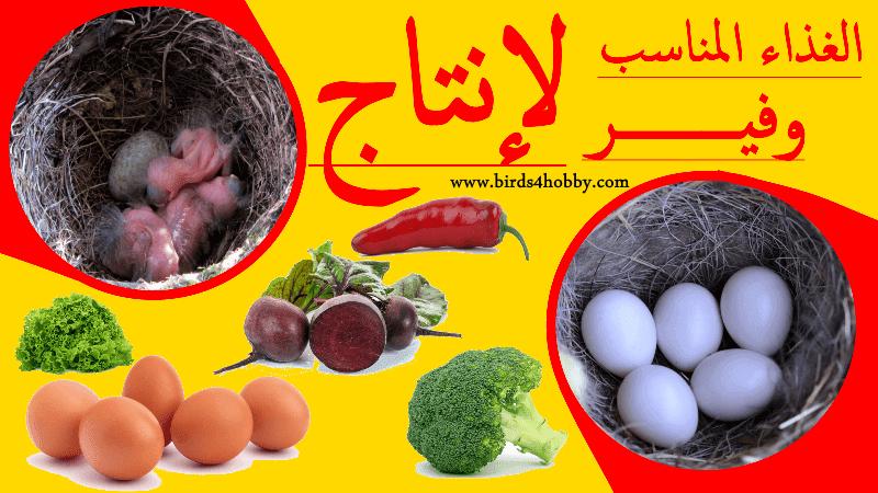 الأكل المتوازن الذي يجب توفيره ل الطيور الحسون الكناري بشكل يومي وأيضا  أتناء فترة الإنتاج