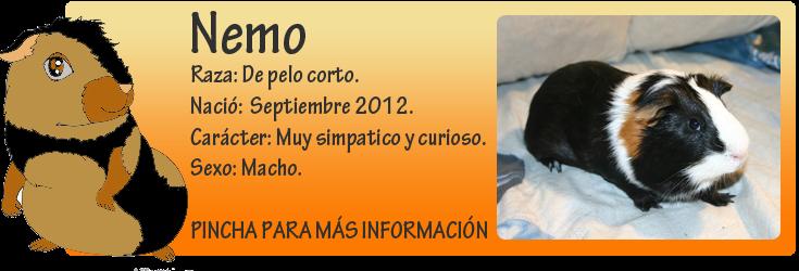 http://almaexoticos.blogspot.com.es/2014/09/nemo-cobayito-macho-sacado-de-la-perrera.html