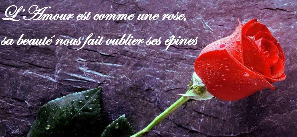 Frases Frances Viagem