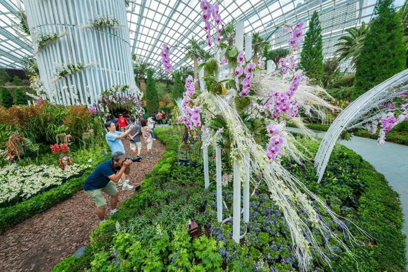 Certamen floral orquídeas