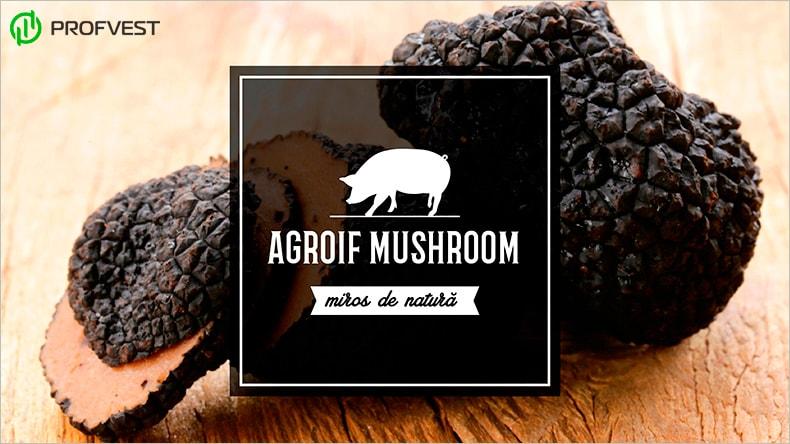 Agroif Mushroom обзор, отзывы и личный опыт