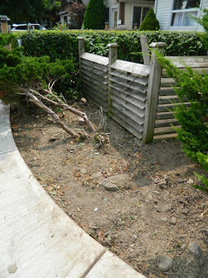 By Paul Jung Gardening Services--a Toronto Organic Gardening Company Leslieville Front Garden Cleanup After