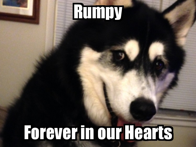 I Love You Rumpy