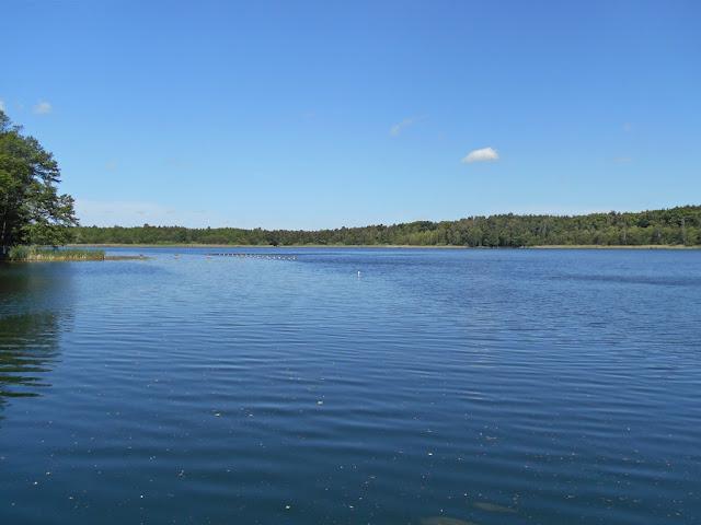 odbicia, las, woda, jezioro, fotografia