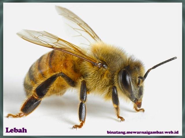 gambar lebah
