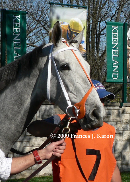 Running Rough Shod Tapit Saturday Star