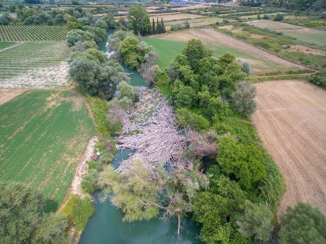 Θεσπρωτία: Γέμισε νεκρά πλατάνια ολόκληρος ο Καλαμάς στη Θεσπρωτία και θα καθαρισθεί τμηματικά