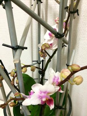 styling af orkide diy