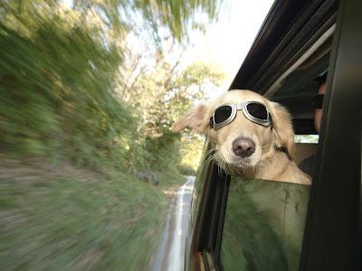 lunas, perros, llaves, seguro de coche, romper, cristal,